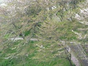 Sakuranokomiti